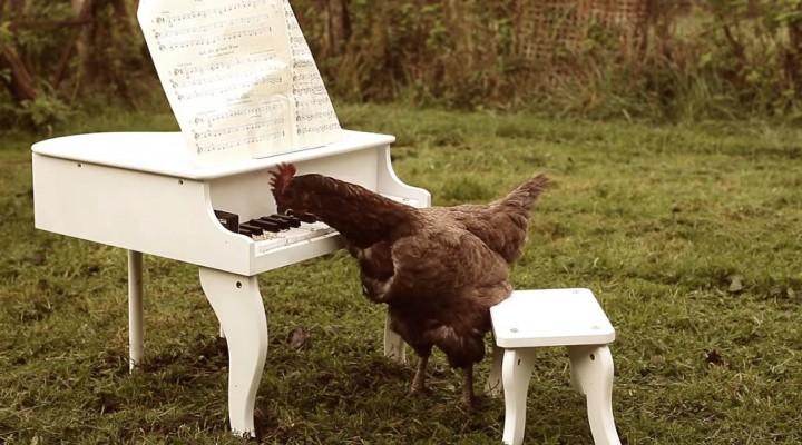Igorrr-My-Chicken-s-Symphony-720x400